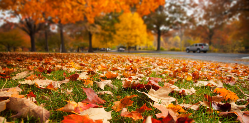 Fall Backyard Cleanup : Hire a Troy Landscaping Company for a Fall CleanUp or Design